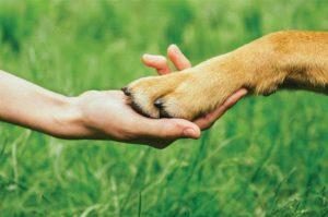 CMA aprova projeto de lei que classifica animais como sujeitos de direitos